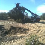 tree removal for site clearance